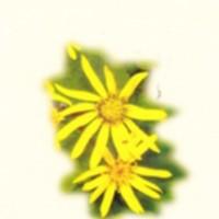 http://kirjasto.asiakkaat.sigmatic.fi/Ejpg/km81.jpg